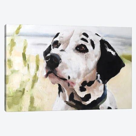 Dalmatian Dog Canvas Print #JCT51} by James Coates Art Print