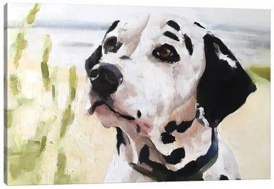 Dalmatian Dog Canvas Art Print