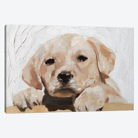 Golden Labrador Puppy Canvas Print #JCT62} by James Coates Canvas Art