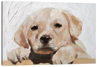 Golden Labrador Puppy Canvas Art Print