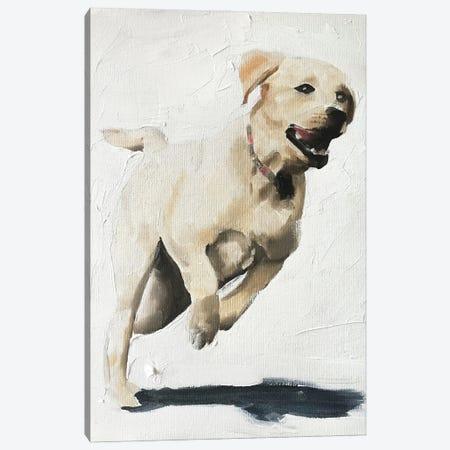 Happy Labrador Canvas Print #JCT67} by James Coates Canvas Art Print