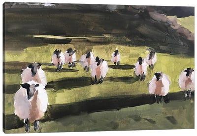 A Field Of Sheep Canvas Art Print