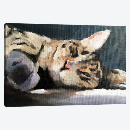 Lazy Cat Canvas Print #JCT87} by James Coates Canvas Art Print