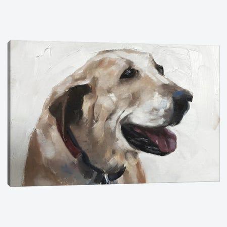 Old Dog Canvas Print #JCT99} by James Coates Art Print