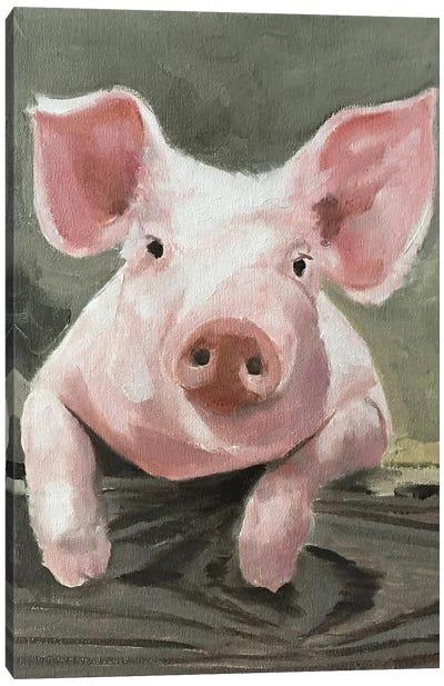A Pig Canvas Art Print