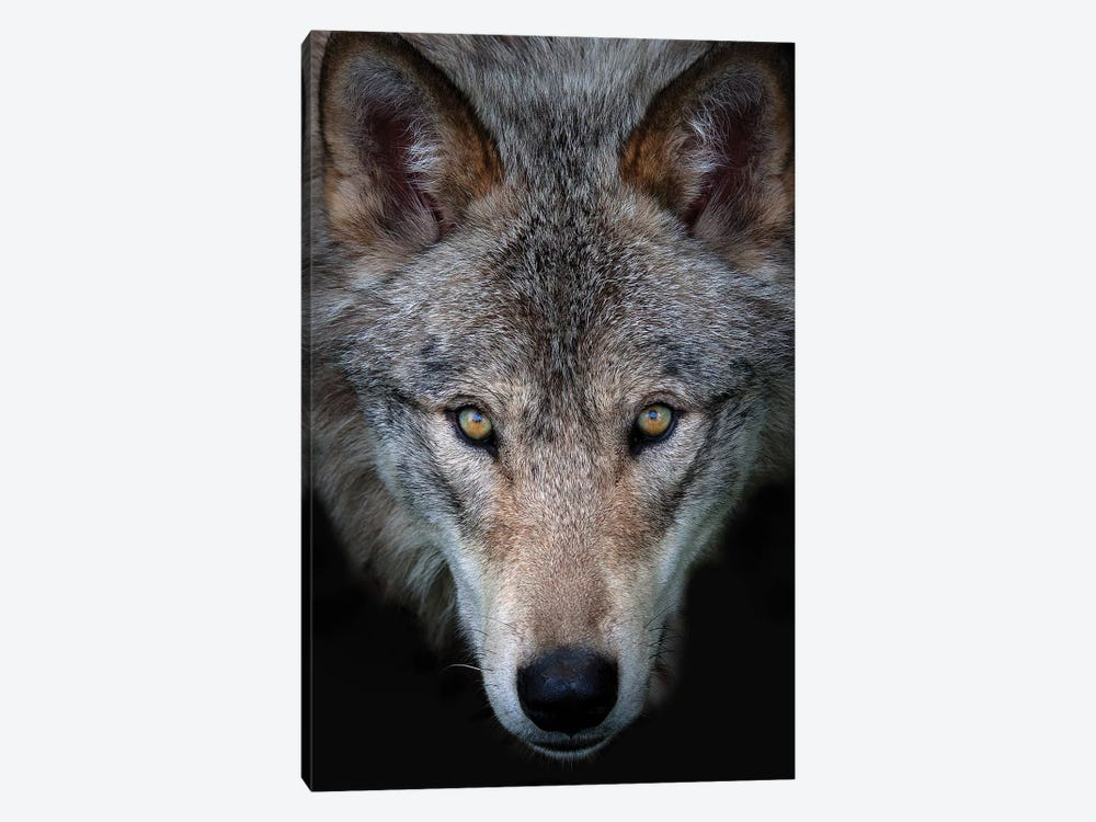 All The Better To See You - Timber Wolf by Jim Cumming 1-piece Art Print