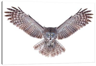 Power - Great Grey Owl Canvas Art Print
