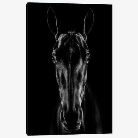 The Horse In Noir Canvas Print #JCV2} by Jackson Carvalho Art Print