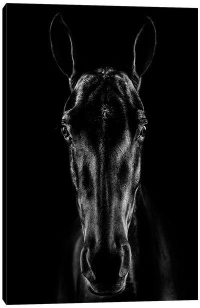 The Horse In Noir Canvas Art Print