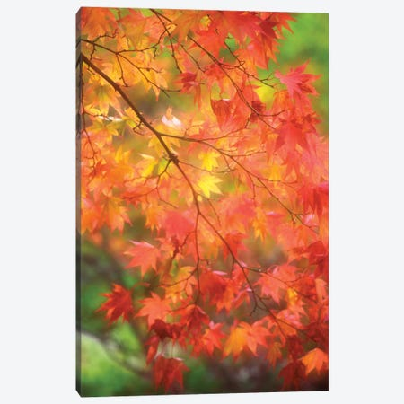 Maple Leaves In Autumn Canvas Print #JDA1} by Janell Davidson Canvas Artwork