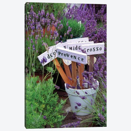 Lavender Variety Stakes In A Pot Canvas Print #JDA2} by Janell Davidson Canvas Wall Art