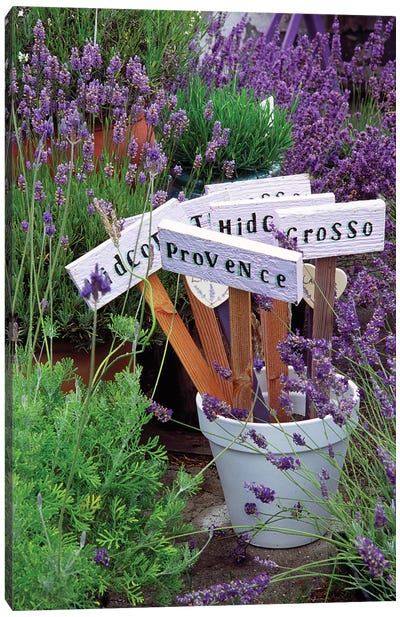 Lavender Variety Stakes In A Pot Canvas Art Print