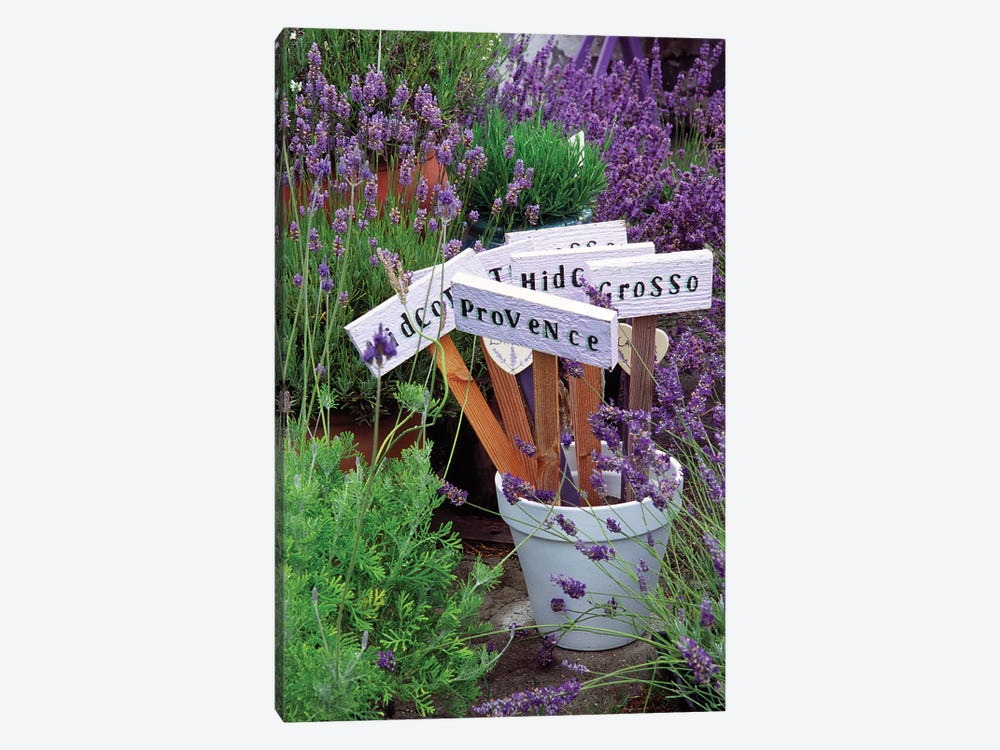 Lavender Variety Stakes In A Pot by Janell Davidson 1-piece Canvas Art