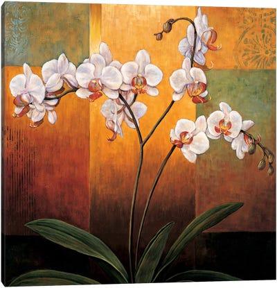 Orchids Canvas Print #JDE16