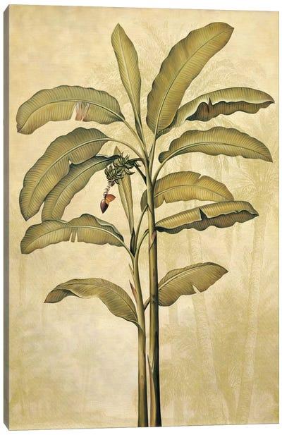 Palms Of The Tropics II Canvas Art Print