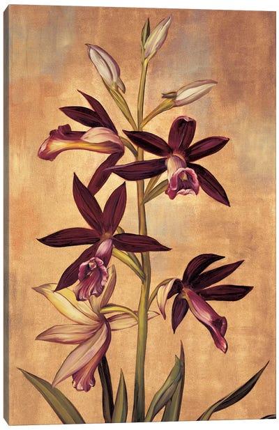 Burgundy Orchid Canvas Print #JDE6