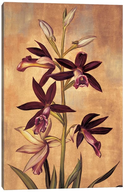 Burgundy Orchid Canvas Art Print