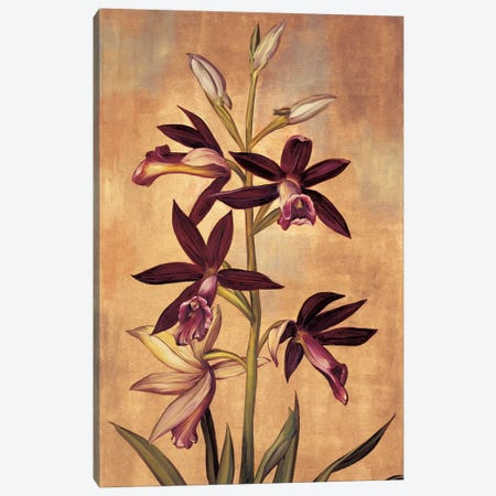 Burgundy Orchid Canvas Print #JDE6} by Jill Deveraux Canvas Art Print