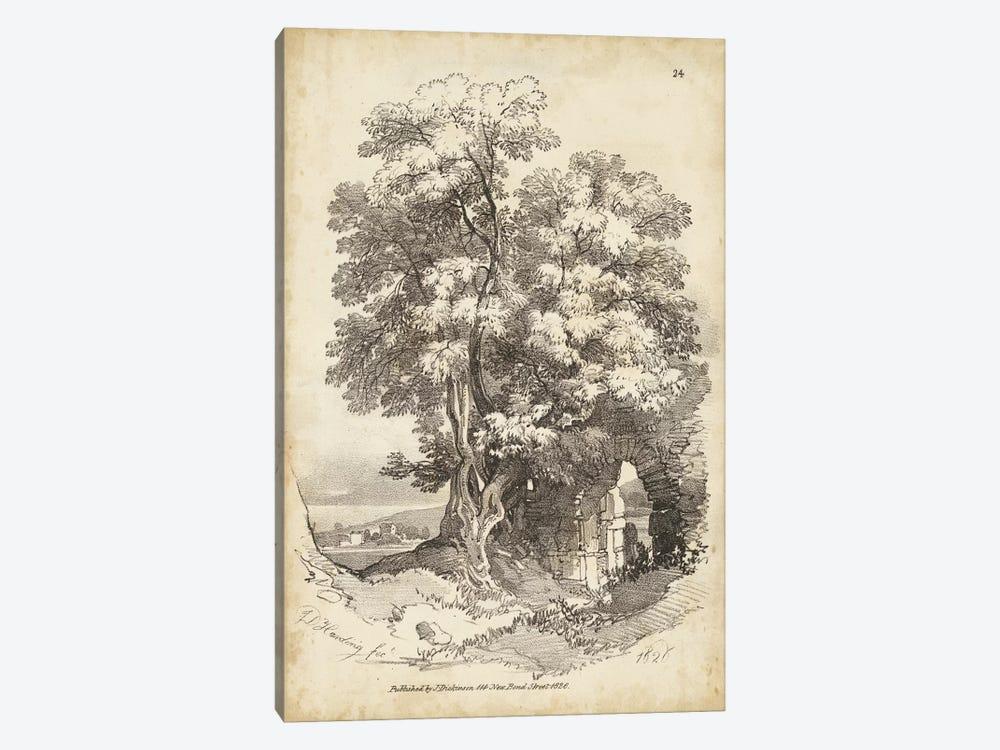 Noble Tree II by J.D. Harding 1-piece Canvas Print