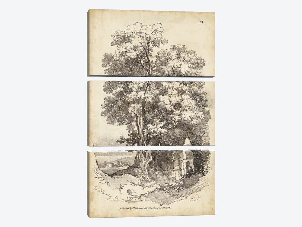 Noble Tree II by J.D. Harding 3-piece Art Print