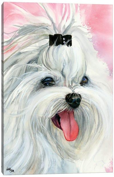 Lovely Lexi - Maltese Canvas Art Print