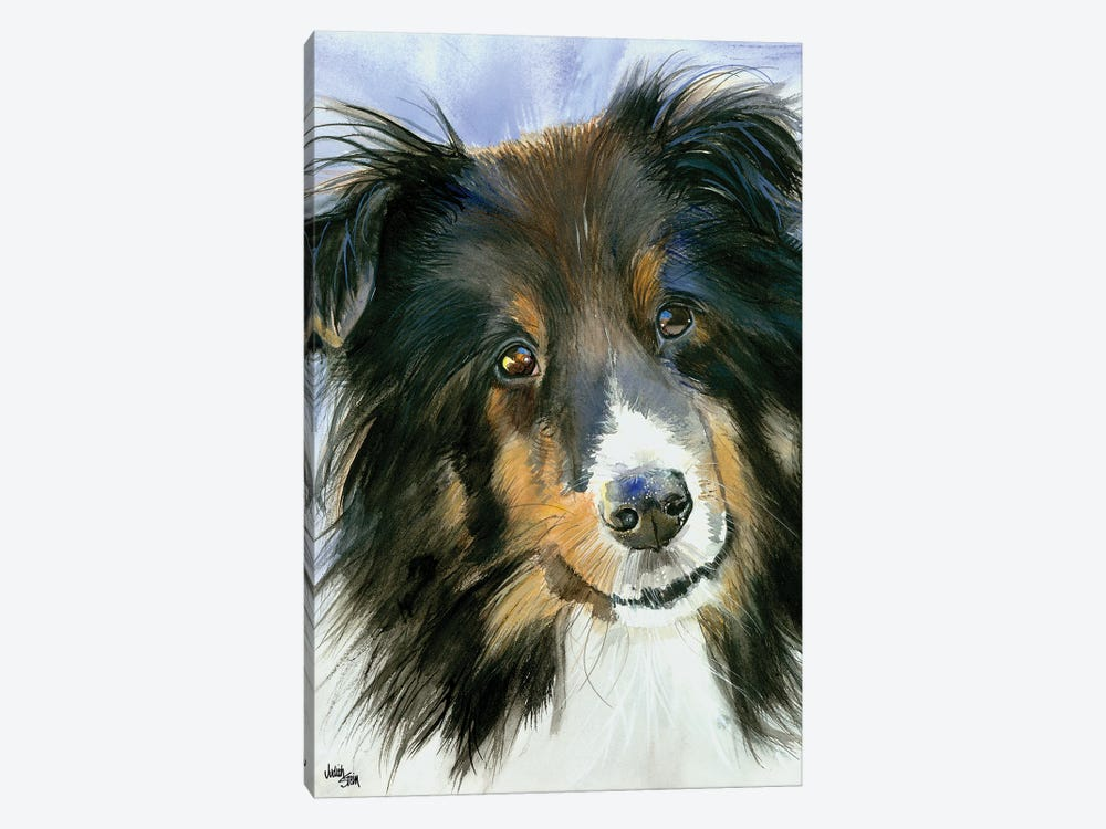 Lucy in the Sky - Shetland Sheepdog by Judith Stein 1-piece Canvas Print