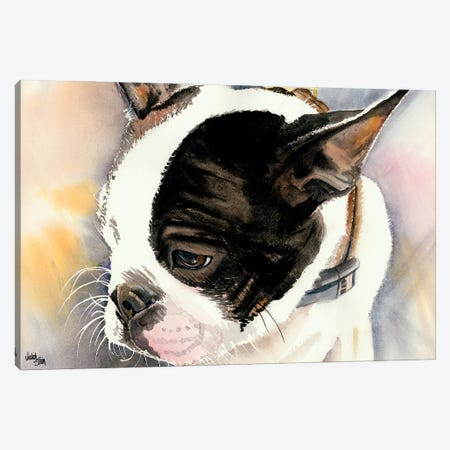 Made in American - Boston Terrier Puppy 3-Piece Canvas #JDI104} by Judith Stein Art Print