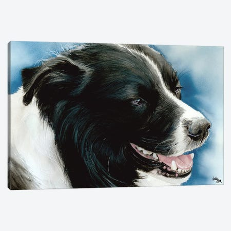 Name Game - Border Collie Canvas Print #JDI112} by Judith Stein Canvas Print