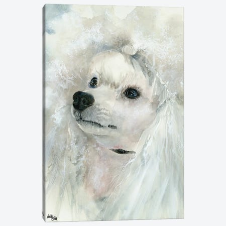 Pampered Pooch - Miniature White Poodle Canvas Print #JDI114} by Judith Stein Canvas Artwork