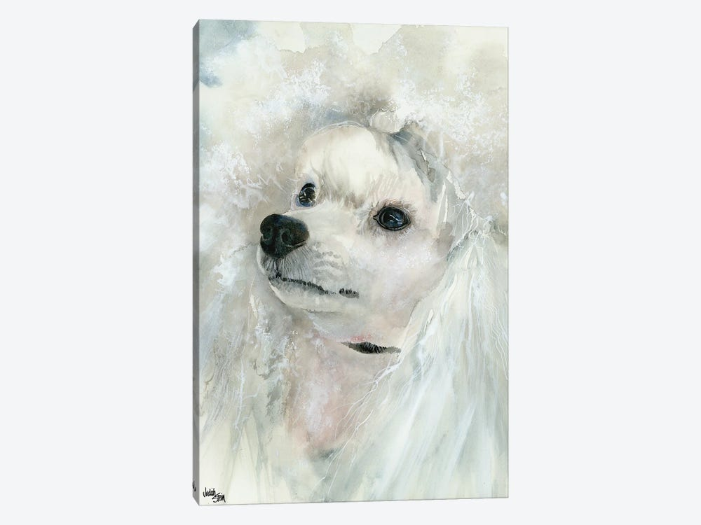 Pampered Pooch - Miniature White Poodle by Judith Stein 1-piece Canvas Artwork