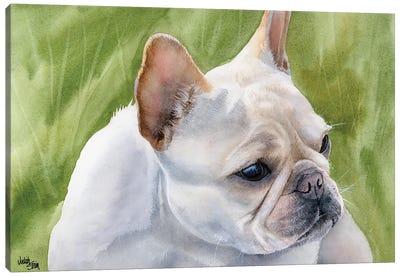 Pants - French Bulldog Fawn Canvas Art Print