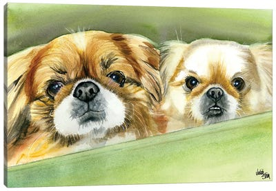 Peke Pups Canvas Art Print