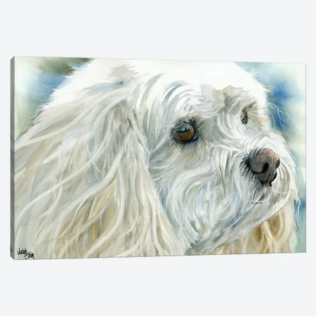 Perfect Pet - Cavachon Dog Canvas Print #JDI117} by Judith Stein Canvas Artwork