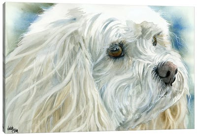 Perfect Pet - Cavachon Dog Canvas Art Print