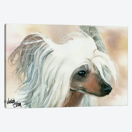 Bad Hair Day - Chinese Crested Canvas Print #JDI11} by Judith Stein Canvas Print