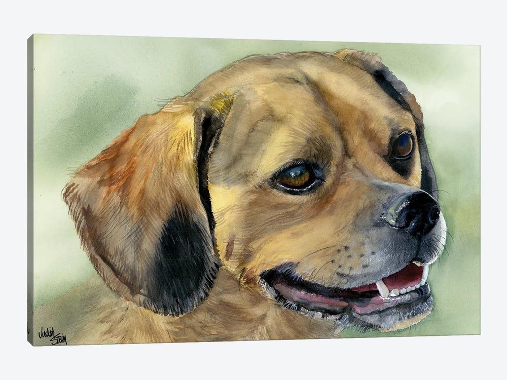 Puggle Bug - Puggle Dog by Judith Stein 1-piece Canvas Art Print