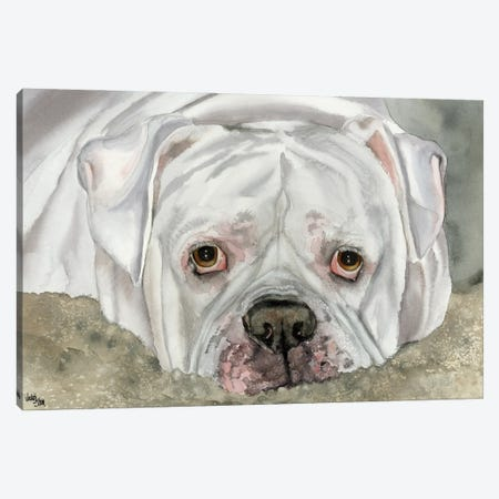 Second Hand Man - American Bulldog - Bingo Canvas Print #JDI137} by Judith Stein Canvas Artwork