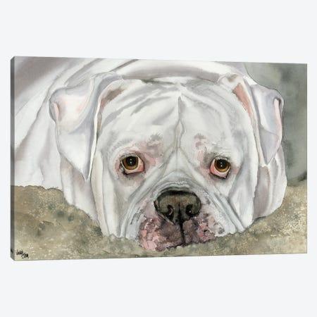 Second Hand Man - American Bulldog - Bingo Canvas Print #JDI137} by Judith Stein Canvas Artwork