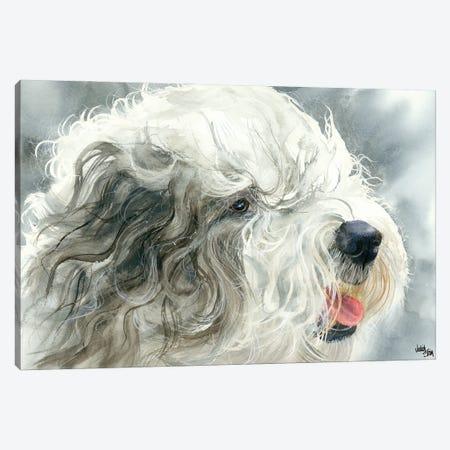 Sheepish Grin - Old English Sheepdog Canvas Print #JDI138} by Judith Stein Art Print