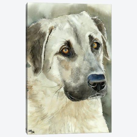Shepherd's Guardian - Anatolian Shepherd Canvas Print #JDI139} by Judith Stein Canvas Art Print