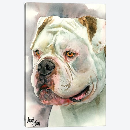 Bear With Me - American Bulldog Canvas Print #JDI13} by Judith Stein Art Print