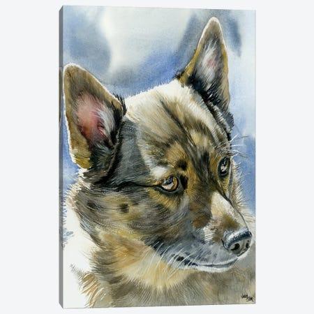 Viking Dog - Swedish Vallhund Canvas Print #JDI162} by Judith Stein Canvas Wall Art