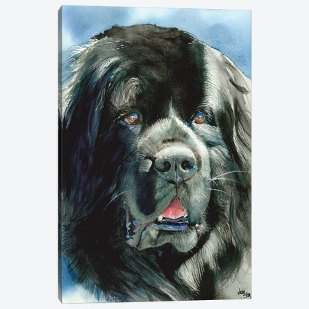 What's Newfie - Newfoundland Canvas Print #JDI167} by Judith Stein Canvas Art Print