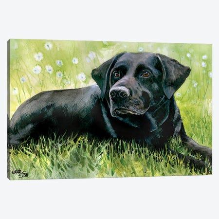 Black Fox - Labrador Retriever Canvas Print #JDI21} by Judith Stein Canvas Art