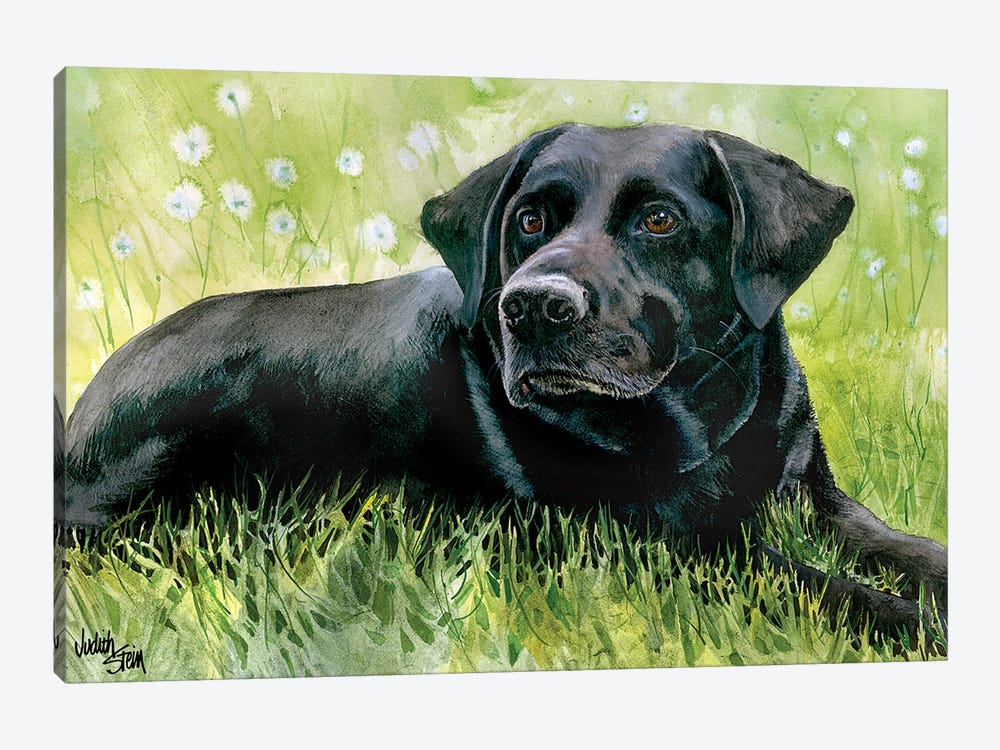 Black Fox - Labrador Retriever by Judith Stein 1-piece Canvas Art