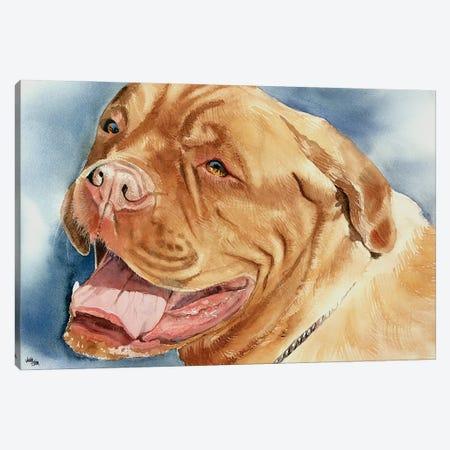 Bordeaux - Dogue de Bordeaux Canvas Print #JDI26} by Judith Stein Canvas Print