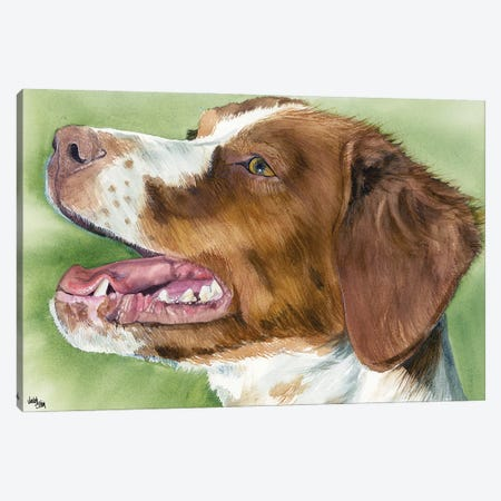 Brit - Brittany  Canvas Print #JDI30} by Judith Stein Canvas Art Print