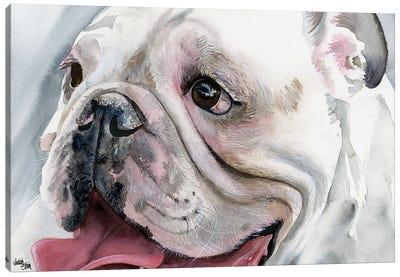 Bull's Eye - English Bulldog Canvas Art Print