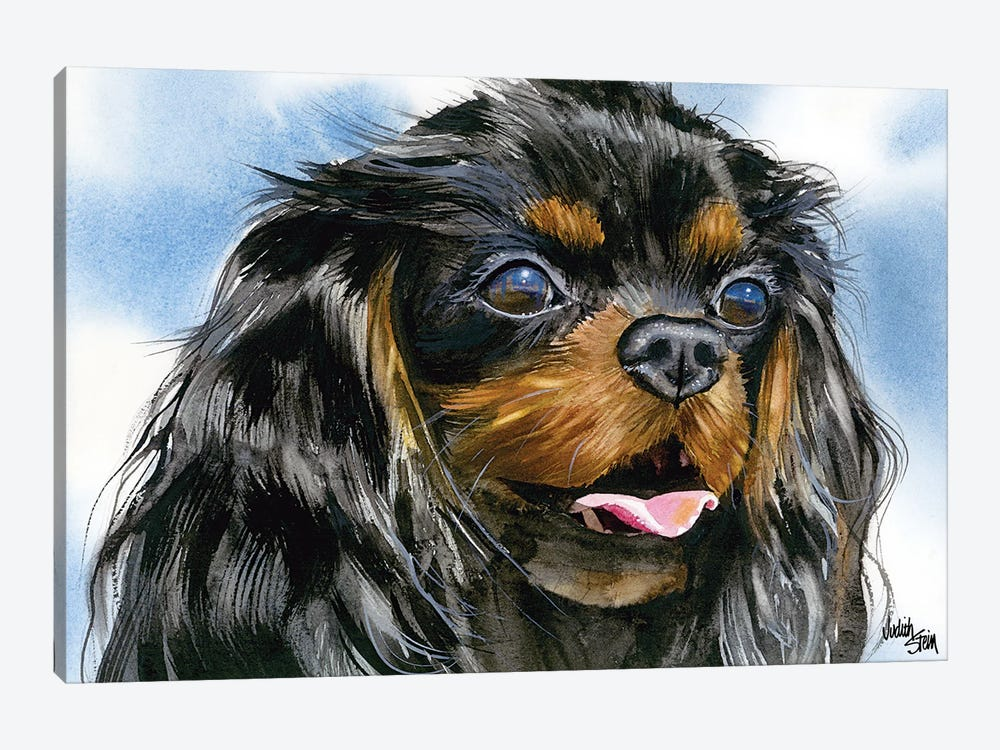 Cavalier - Cavalier King Charles Spaniel - Black and Tan by Judith Stein 1-piece Canvas Art