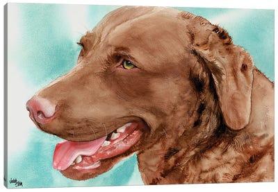 Chessie - Chesapeake Bay Retriever Canvas Art Print